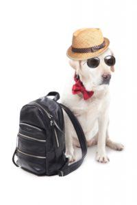 rucksack dog
